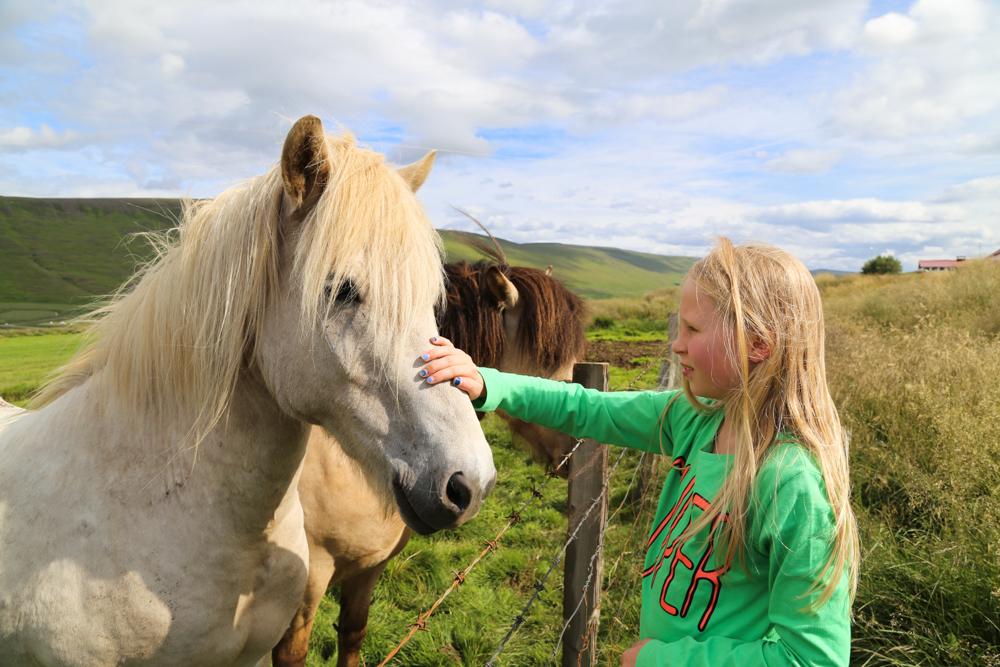 Heppatytön unelma - issikkavaellus Islannissa