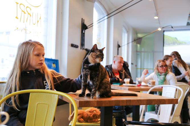 Kissa kahvilan pöydällä