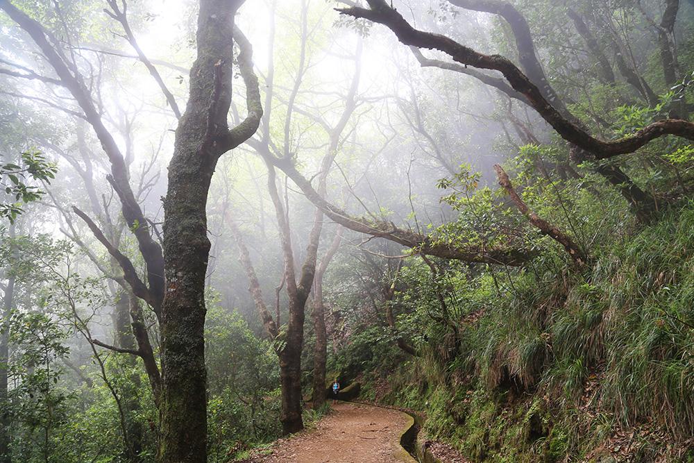Madeiran satumaiset levadat
